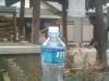走水神社の湧き水をペットボトルに詰め込みました